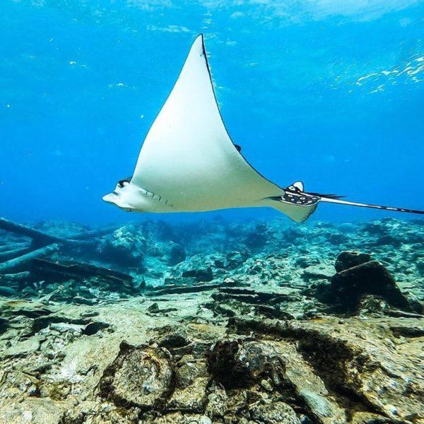 Kitesurf en San Andrés Islas, Colombia